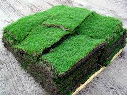 Instant lawn before installation