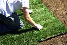Instant lawn installation