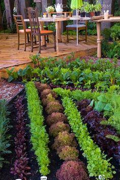 Veg and herb garden