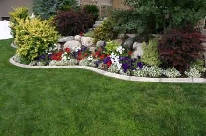 landscaping on a tight budget
