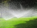 Instant lawn needs to be watered daily