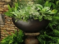 Urn surrounded by ferns. Perfect for a shady area