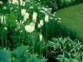 White and green garden design